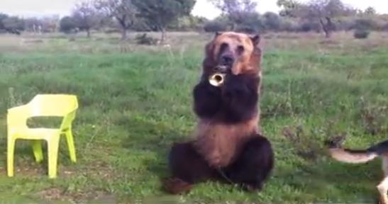 Mi nombre Pavel y este es mi oso. - YouTube